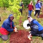 Tree Planting_2
